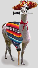 Tony-the-Wonder-Llama